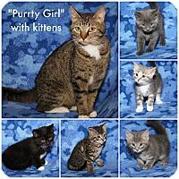 Adopt A Pet :: Purrty Girl & Kittens - Marietta, OH