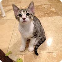 Adopt A Pet :: Bubblicious - Apex, NC