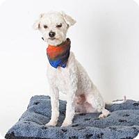 Adopt A Pet :: *JOEY - Sacramento, CA
