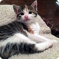 Adopt A Pet :: Faire - Mississauga, Ontario, ON