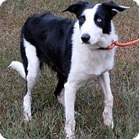 Adopt A Pet :: Wally - Towson, MD