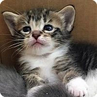 Adopt A Pet :: Tiggy - Fort Lauderdale, FL