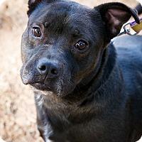 Adopt A Pet :: Zeke - Marietta, GA