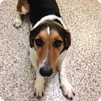Adopt A Pet :: Bonnie - Aiken, SC