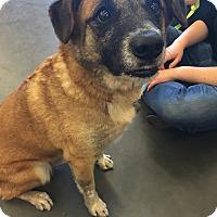 Adopt A Pet :: Meeko - Modesto, CA