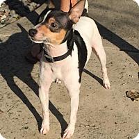 Adopt A Pet :: Woody - Vacaville, CA