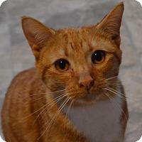 Adopt A Pet :: Peeta - Brownsboro, AL