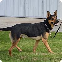 Adopt A Pet :: Trapper - Irvine, CA
