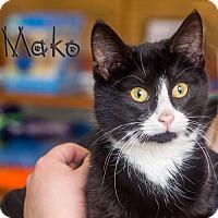 Adopt A Pet :: Mako - Somerset, PA
