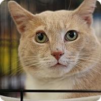 Adopt A Pet :: Jack Frost - Richmond, VA