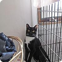 Adopt A Pet :: Mia - Corinth, NY
