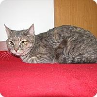 Adopt A Pet :: Morgan - Lebanon, PA