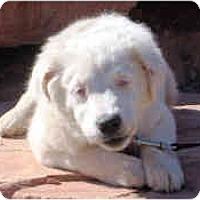 Adopt A Pet :: Sophie - Mesa, AZ