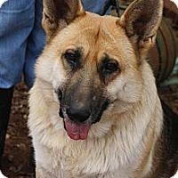 Adopt A Pet :: Tate - Knoxville, TN