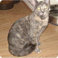 Adopt A Pet :: Lily - Huffman, TX