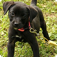 Adopt A Pet :: Tully - Staunton, VA