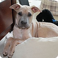 Adopt A Pet :: Honda - Staunton, VA