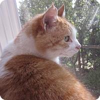Adopt A Pet :: Boomer - Davis, CA