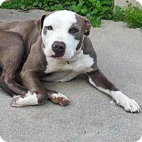 Adopt A Pet :: Bogey - Mission Viejo, CA