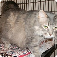 Adopt A Pet :: Lady Bug Angel - Lacon, IL