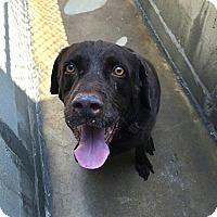 Adopt A Pet :: Curtis - Buckeystown, MD