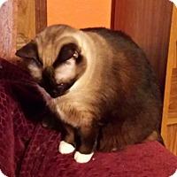Adopt A Pet :: Kindzi - Ennis, TX