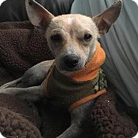 Adopt A Pet :: Brando - Joliet, IL