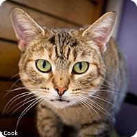 Adopt A Pet :: Poppy - Ann Arbor, MI