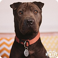 Adopt A Pet :: Jarven - Portland, OR