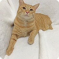 Adopt A Pet :: Bailey - Mission Viejo, CA