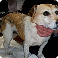 Adopt A Pet :: Mazy - Irmo, SC