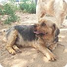 Adopt A Pet :: Tobby