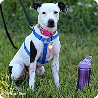 Adopt A Pet :: Roxie - Bedford, VA