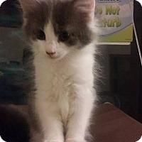 Adopt A Pet :: Eevee - Leonardtown, MD