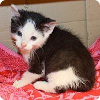Adopt A Pet :: Nicholas - Fairborn, OH