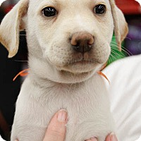 Adopt A Pet :: Meeann - Washington, DC