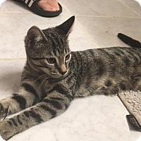 Adopt A Pet :: Otis - Washington, DC