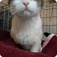 Adopt A Pet :: Meadows - Hanna City, IL