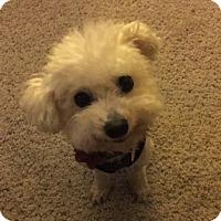 Adopt A Pet :: Princess - Placentia, CA