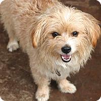 Adopt A Pet :: Fenwood - Allentown, PA