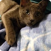 Adopt A Pet :: Joe - West Des Moines, IA
