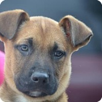 Adopt A Pet :: Alder - Chester Springs, PA