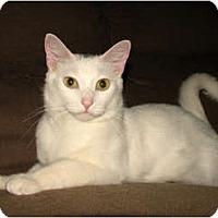 Adopt A Pet :: GW - Oxford, NY