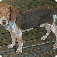 Adopt A Pet :: Zeekie - Palm Bay, FL
