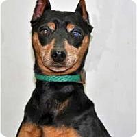 Adopt A Pet :: Tito - Port Washington, NY