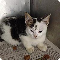 Adopt A Pet :: Carlie - Lancaster, VA