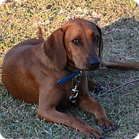 Adopt A Pet :: Red Rebel - Dallas, TX
