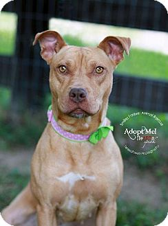 Pit Bull Terrier Mix Dog for adoption in Fincastle, Virginia - Brooklyn