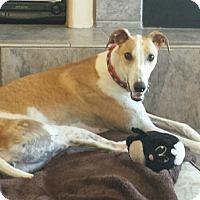 Adopt A Pet :: Emily - Tucson, AZ