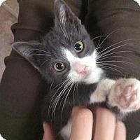 Adopt A Pet :: Topanga - Philadelphia, PA